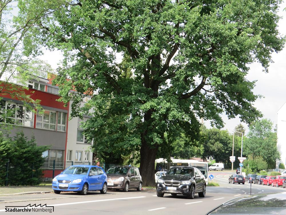 Ödenberger Straße mit Eiche